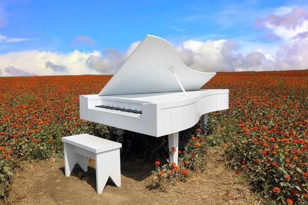 White grand piano in a field of Zinnia's, Taiwan