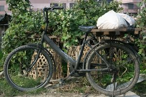 Bicycle (Selection of 1 Items)