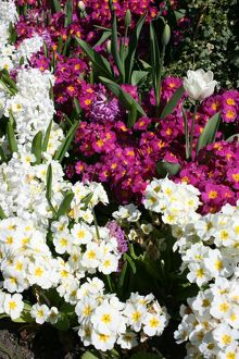 Mixed spring flowers in flower bed
